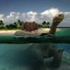 Turtle-Island Thumbnail