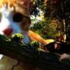 Die Begegnung von Katze und Maus Thumbnail