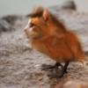 Katzenvogel Thumbnail