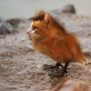Der Katzenvogel Thumbnail