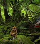 Zug im Wald Thumbnail