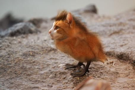 Katzen-Vogel
